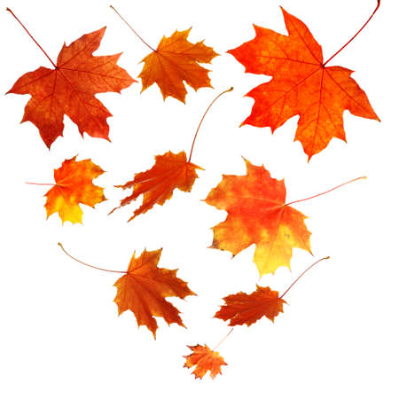 Autumn maple leaves falling down, isolated on white Stockfoto