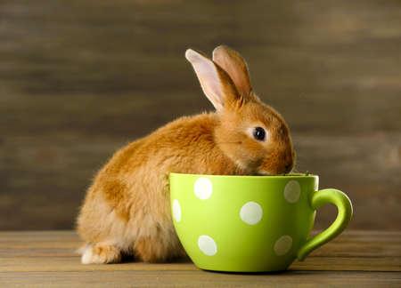 Kleines Kaninchen auf Holzuntergrund