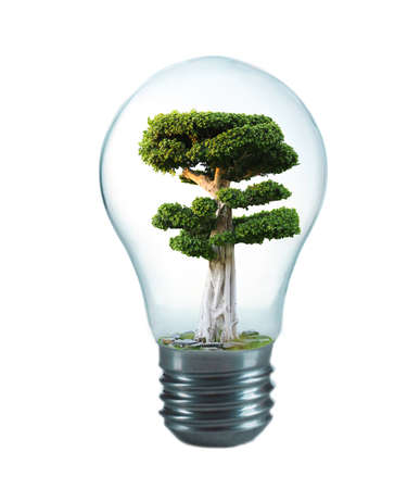 growing inside: Green eco energy concept. Tree growing inside light bulb, isolated on white