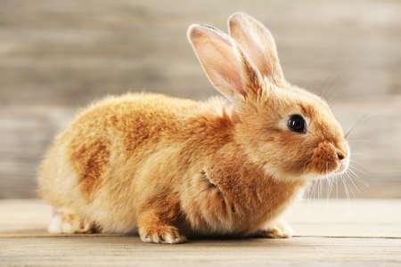 conejo: Peque�o conejo sobre fondo de madera