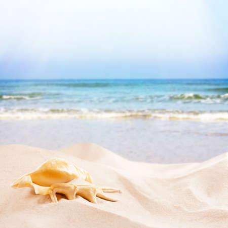 seashell: Seashell and sand on sea background