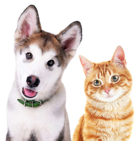 curious: Cute cat and dog isolated on white