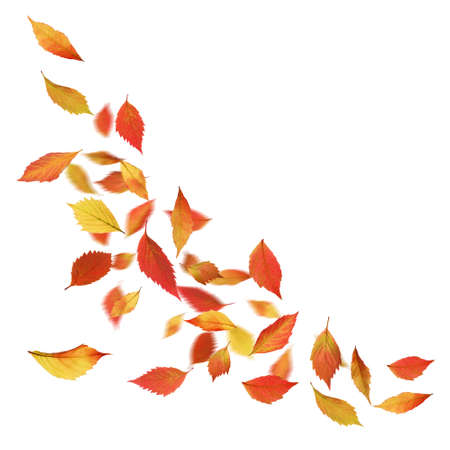 Autumn leaves falling down, isolated on white Stock Photo