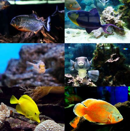 exotic fishes: Underwater world - exotic fishes in an aquarium