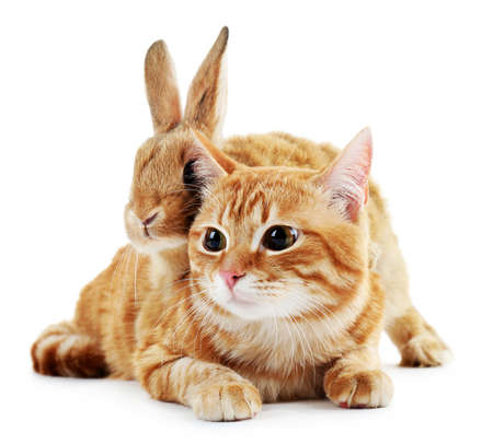 Red cat and rabbit isolated on white