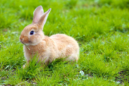 Pequeño conejo en hierba close-up