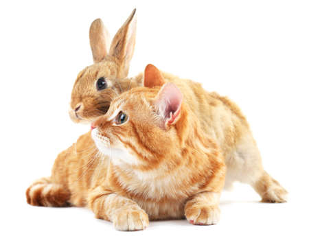 intrigued: Red cat and rabbit isolated on white