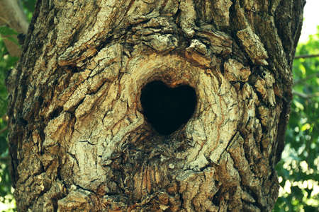 hollow: Tree hollow in heart shape close-up Stock Photo