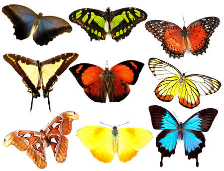 colorfu: Butterflies collection, isolated on white