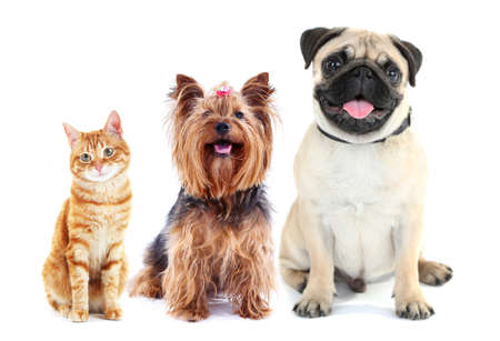 Cute pets isolated on white Banque d'images
