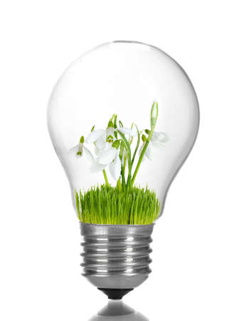 growing inside: Green eco energy concept. Flowers growing inside light bulb, isolated on white