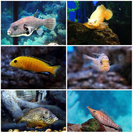 reeffish: Underwater world - exotic fishes in an aquarium