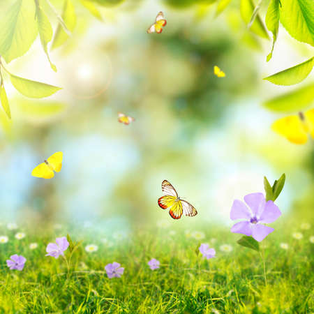 Spring or summer season abstract nature background with butterflies, green grass and leaves Imagens