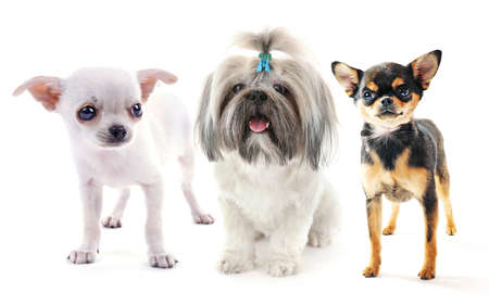 Cute pets isolated on white Stock Photo