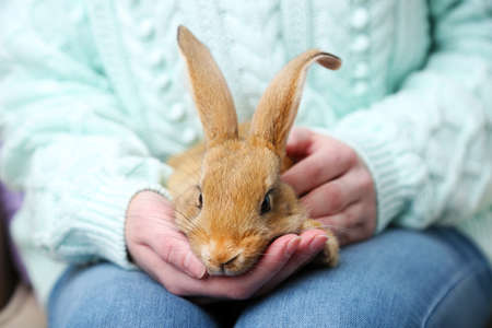 holding close: Woman holding little cute rabbit, close up Stock Photo