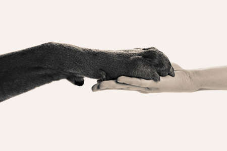 stylization: Dog paw and human hand, black and white retro stylization