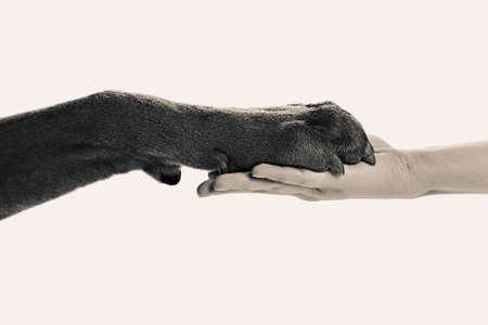 Dog paw and human hand, black and white retro stylization