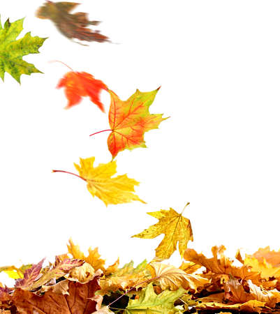 pile of leaves: Pile of autumn leaves, isolated on white