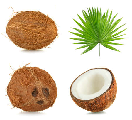 coconut palm: Fresh coconuts with palm leaf, isolated  on white