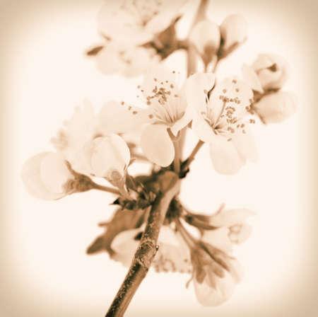 retro flowers: Beautiful spring flowers. Retro effect