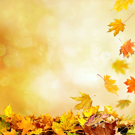pile of leaves: Pile of autumn leaves on nature background Stock Photo