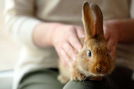 Woman holding little cute rabbit close up