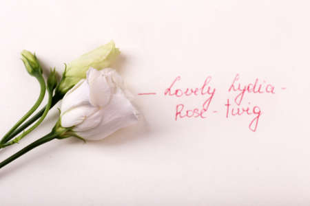 rosy: Beautiful rosy twig with inscription isolated on white Stock Photo