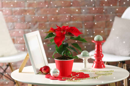 cheery: Modern room interior with Christmas flower poinsettia with falling snow effect