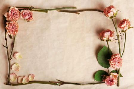 Flores secas en el fondo de papel Foto de archivo - 49400726