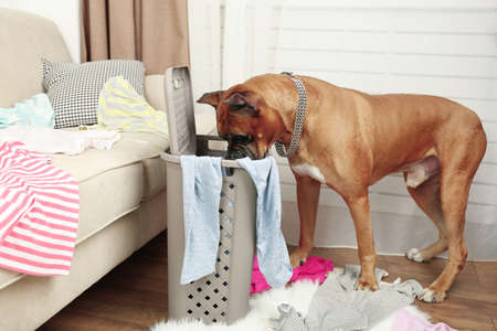 messy room: Dog demolishes clothes in messy room