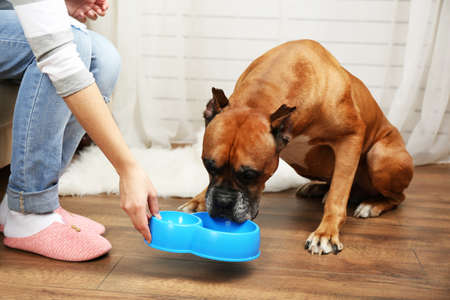 eating: Hungry dog on home interior background Stock Photo