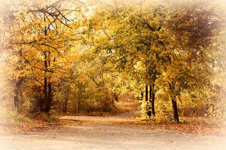 Beautiful autumnal park