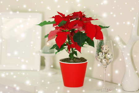 christmas flower poinsettia and decorations on shelf on light background over snow effect stock photo - Christmas Flower Decorations