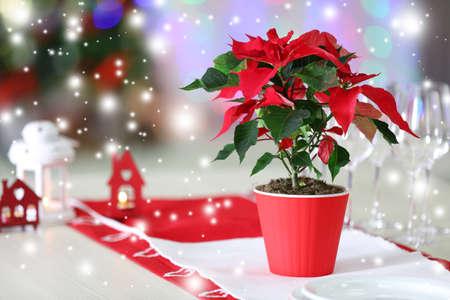flor de pascua: flor de pascua flor de Navidad en la mesa, en el fondo de las luces sobre el efecto de la nieve