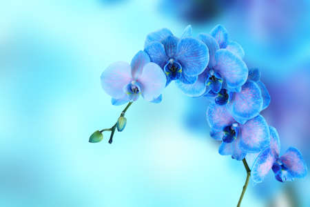 Beautiful blue orchid on blue background with space for text Archivio Fotografico