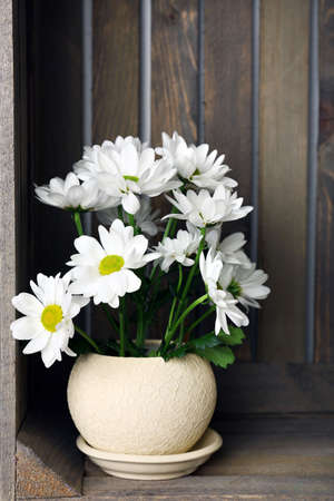 wooden crate: Beautiful chrysanthemum in pot in wooden crate