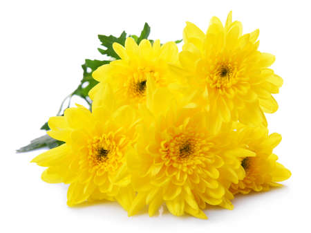 mazzo di fiori: Bel mazzo di crisantemi giallo vicino Archivio Fotografico