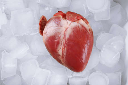 Heart organ with ice close up Stock Photo
