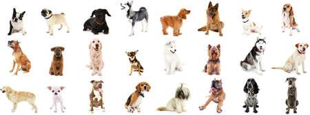 犬の品種は、白で隔離の大規模なグループ 写真素材