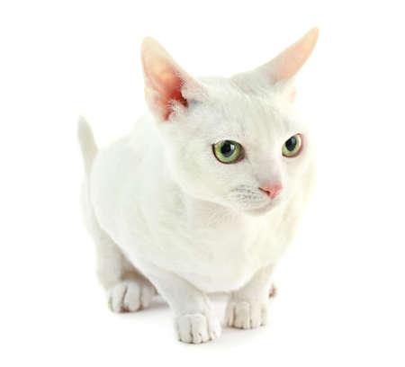 frisky: Beautiful cat isolated on white