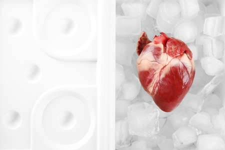heart organ: Heart organ in fridge close up