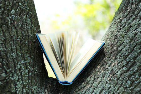 guidebook: Book on tree, close-up