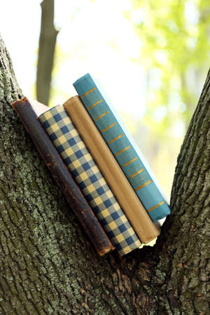 guidebook: Books on tree, close-up