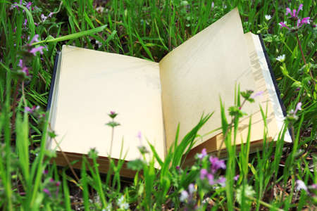 opened: Opened book on green grass background