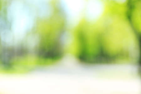 focus on background: Green natural background of out of focus forest Stock Photo