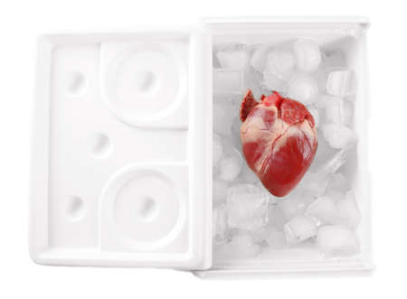 heart organ: Heart organ in fridge isolated on white