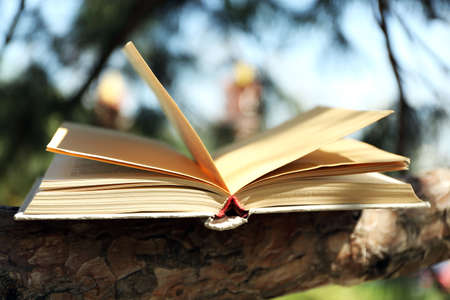 between: Book on tree branch, close-up