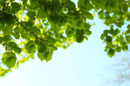 twigs: Beautiful green twigs on blue sky background