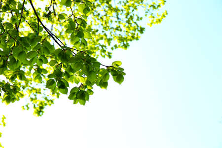blue green background: Beautiful green twigs on blue sky background