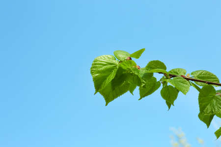 blue green background: Beautiful green twig on blue sky background Stock Photo